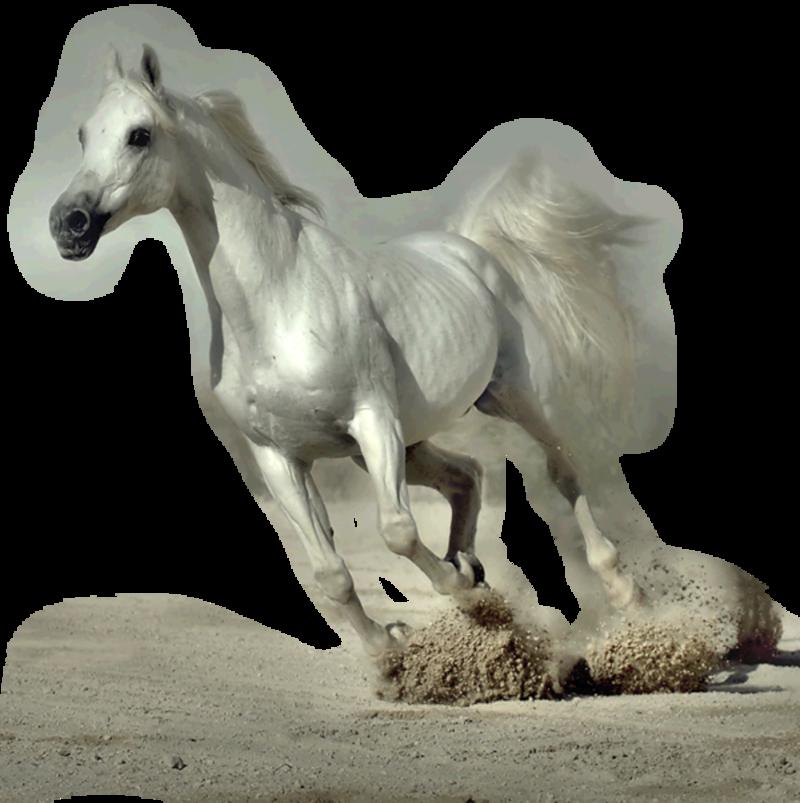 теперь прозрачные картинки лошадей скачать
