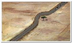 ağaç kesilmez yol kıvrılır