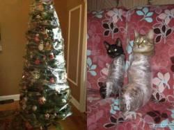 yılbaşı ağacını kedilerden koru