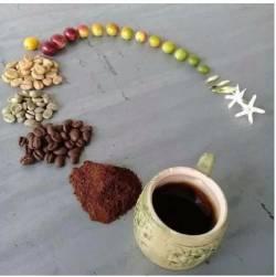 Kahve çiçeği hayat siklusu